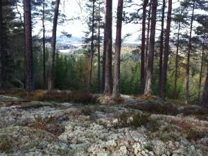 Utsikt fra liene sør for Ånnerud.